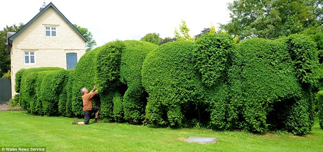https://follyfancier.files.wordpress.com/2009/07/topiary-folly.jpg?w=899&h=433