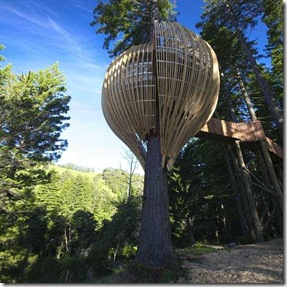 tree house nz 2